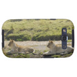 lion (Panthera leo),two young lioness, Masai Galaxy SIII Covers