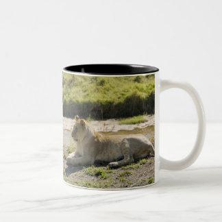 lion (Panthera leo),two young lioness, Masai Two-Tone Coffee Mug