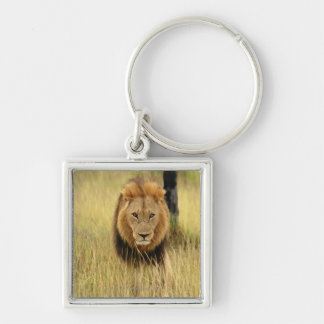 Lion (Panthera leo) walking in a forest, Keychain