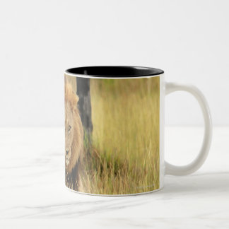 Lion (Panthera leo) walking in a forest, Two-Tone Coffee Mug