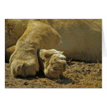 Lion Paws Greeting Card