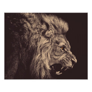 lion pencil art lion roar black and white poster