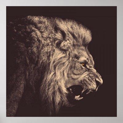 lion pencil art lion roar black and white poster zazzle com