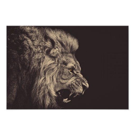 lion pencil art lion roar black and white poster Zazzlecom