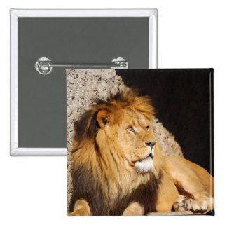Lion Photo Square Pin