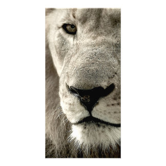 lion photo card template