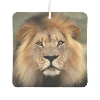 Lion Photograph Air Freshener
