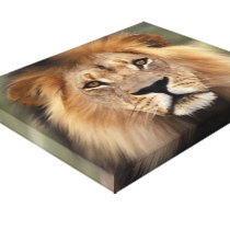 Lion Photograph Canvas Print