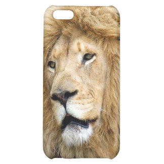 Lion Photograph iPhone 5C Covers