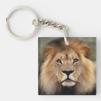 Lion Photograph Single-Sided Square Acrylic Keychain