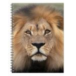 Lion Photograph Spiral Note Book