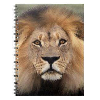 Lion Photograph Spiral Notebook