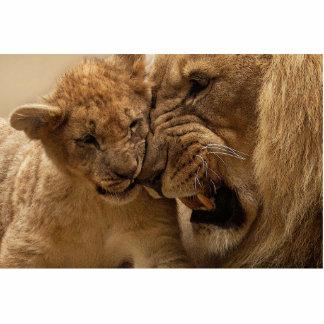 Lion Cut Outs