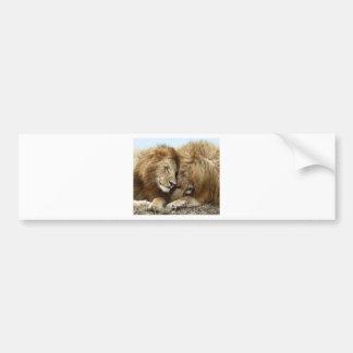 lion pic bumper sticker