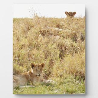 Lion Plaques