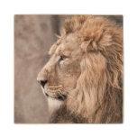 Lion Portrait Wood Coaster