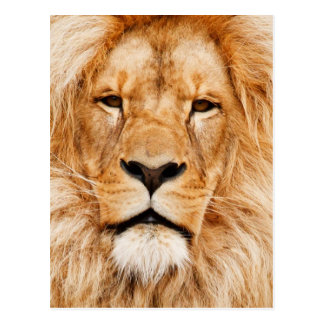Lion Post Card