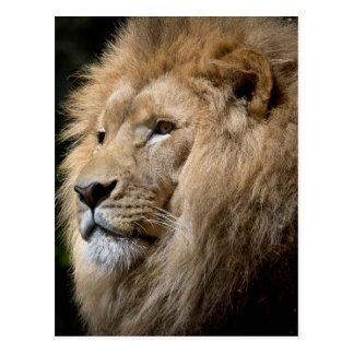Lion Postcard