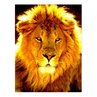 Lion Post Cards