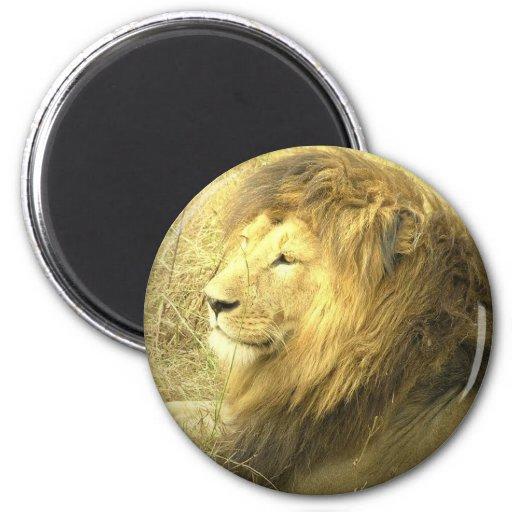 Lion Pride Magnet Fridge Magnet