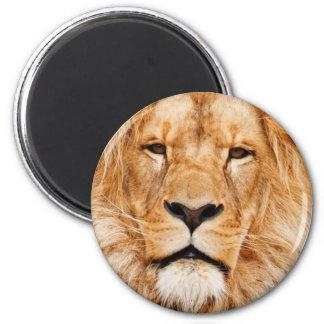 Lion Pride Magnets