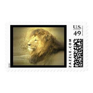 Lion Pride Postage Stamp