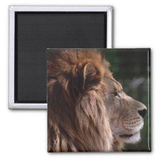 Lion profile 2 inch square magnet
