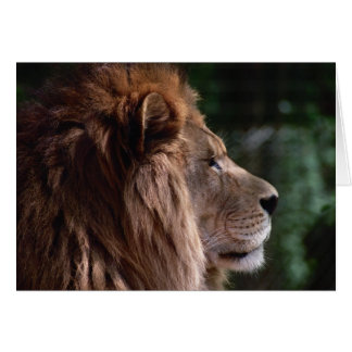 lion profile greeting cards