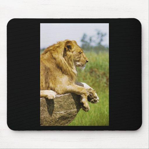 Lion Profile Mouse Pads