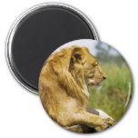 Lion Profile Refrigerator Magnet