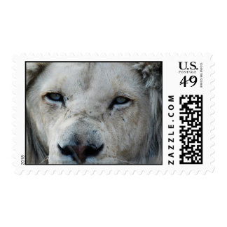 Lion real close up postage stamp
