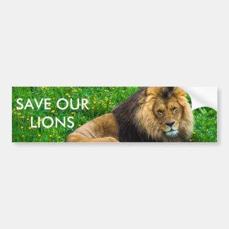 Lion Relaxing in Green Grass Photo Car Bumper Sticker