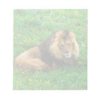 Lion Relaxing in Green Grass Photo Notepad