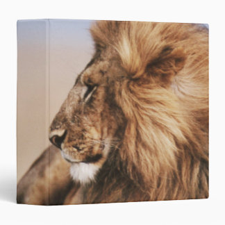 Lion resting in grass 3 ring binder