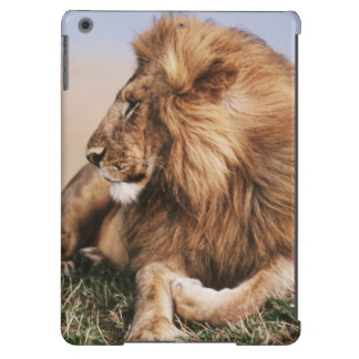 Lion resting in grass iPad air case