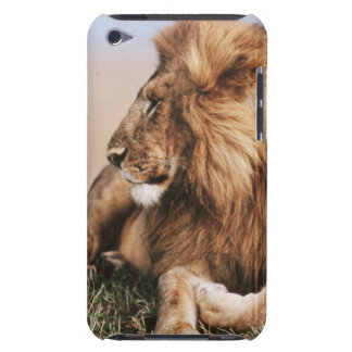 Lion resting in grass iPod touch case