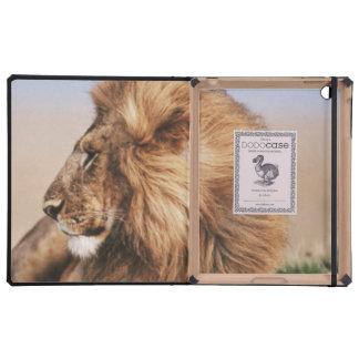 Lion resting in grass iPad folio cases
