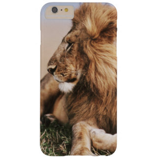 Lion resting in grass barely there iPhone 6 plus case