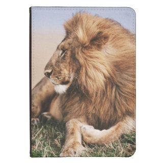 Lion resting in grass kindle 4 cover