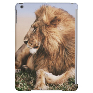 Lion resting in grass iPad air covers