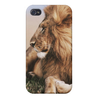 Lion resting in grass cases for iPhone 4