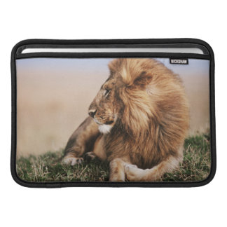 Lion resting in grass MacBook sleeve