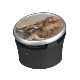 Lion resting in grass bluetooth speaker