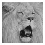 lion roaring big cat wildlife realist art perfect poster