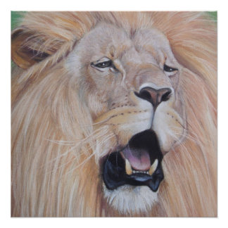 lion roaring big cat wildlife realist art perfect poster