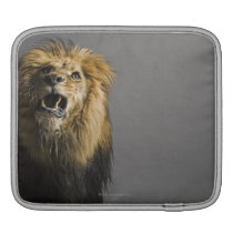 Lion roaring sleeve for iPads