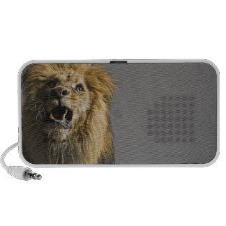 Lion roaring mp3 speakers