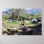 Lion Roaring | Wild Animal Park Poster