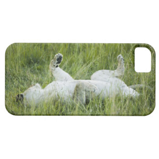 Lion rolling in the tall grass, Africa iPhone SE/5/5s Case