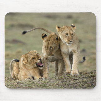 Lion Siblings Mouse Pad